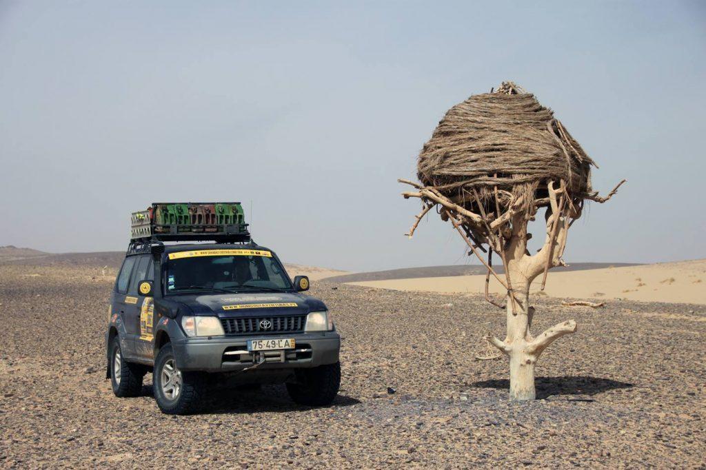 Sahara Desert Challenge 13