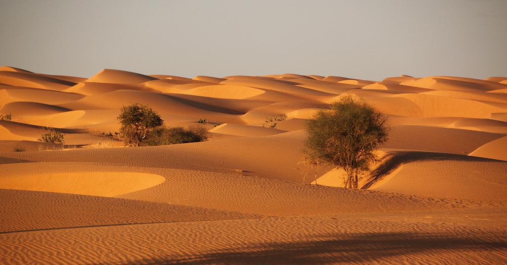 Sahara Desert Challenge 47