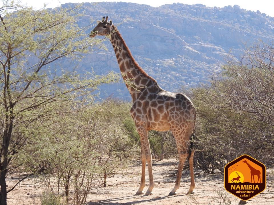 Viaje A Namibia En 4x4 12
