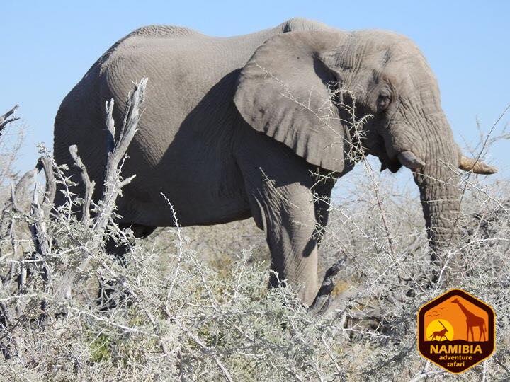 Viaje A Namibia En 4x4 15