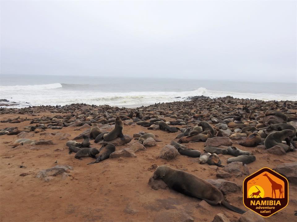 Viaje A Namibia En 4x4 25