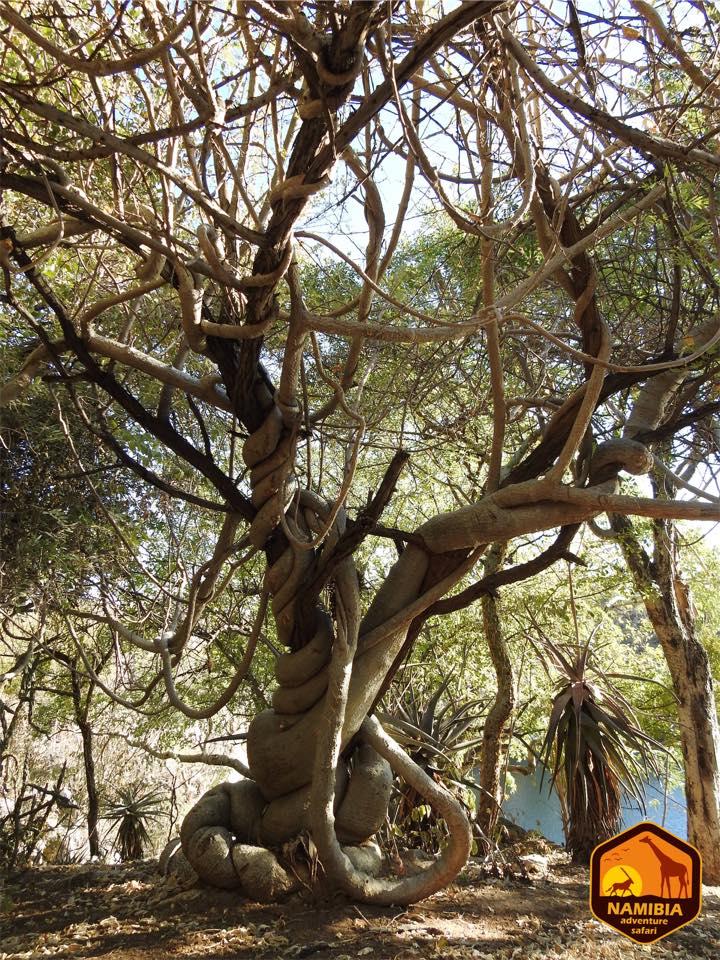 Viaje A Namibia En 4x4 6