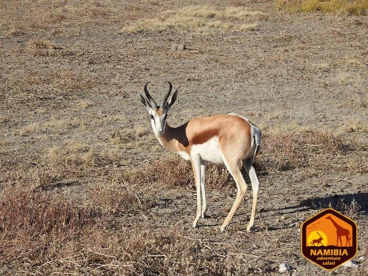 Viaje A Namibia En 4x4 8